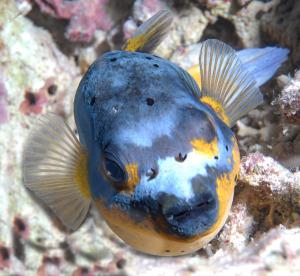 fish-DSC_0208