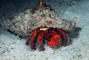 hermit-crab-DSC_0053