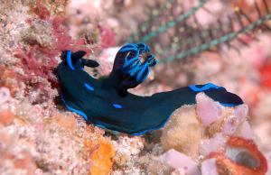 nudibranch-2-DSC_0139