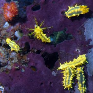 nudibranch-DSC_0210