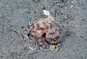 octopus-DSC_0372
