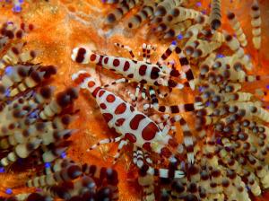 shrimp-DSC_0211