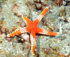 starfish-DSC_0086
