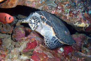 turtle-DSC_0235